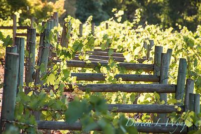 In the vineyard_309