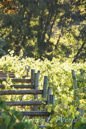 In the vineyard_306