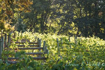 In the vineyard_308