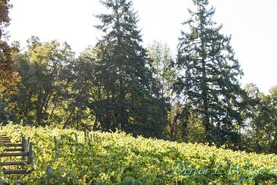 In the vineyard_311
