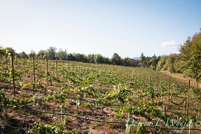 In the vineyard_321