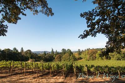 In the vineyard_303