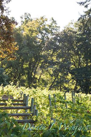 In the vineyard_307