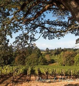 In the vineyard_302