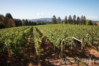 In the vineyard_319