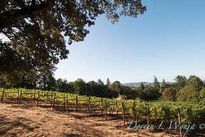In the vineyard_304