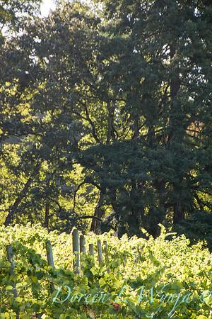 In the vineyard_310