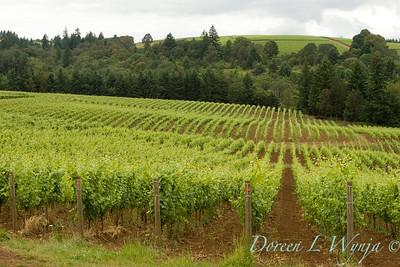 Sokol Blosser vineyards southern view_8631