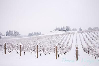 Sokol Blosser in the Snow_187