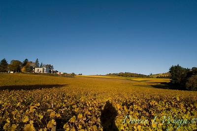 Sokol Blosser fall vineyards_015