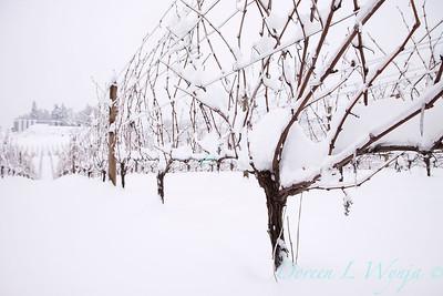 Sokol Blosser in the Snow_183