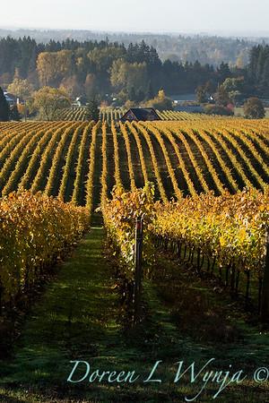 Sokol Blosser fall vineyards_028