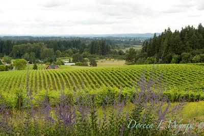 Sokol Blosser vineyards southern view_8650