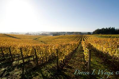 Sokol Blosser fall vineyards_043