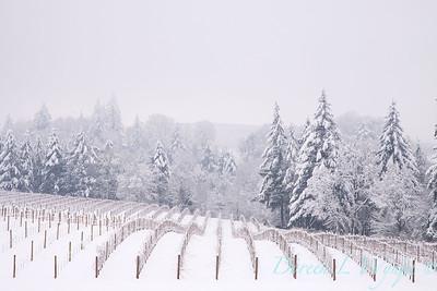 Sokol Blosser in the Snow_196