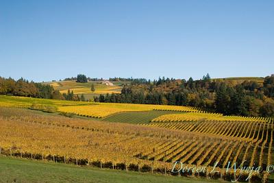 Sokol Blosser fall vineyards_048