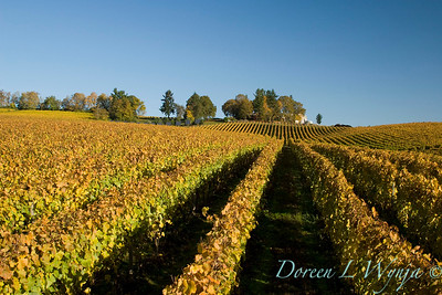 Sokol Blosser fall vineyards_037