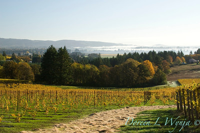 Sokol Blosser fall vineyards_052