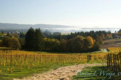 Sokol Blosser fall vineyards_052