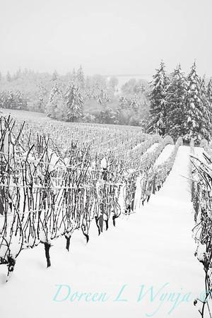 Sokol Blosser in the Snow_159_72ppi