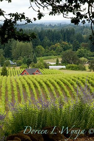 Sokol Blosser vineyards southern view_8656