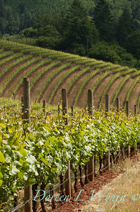 Bella Vida Vineyards_022