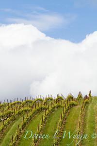 Belle Pnote Winery_010