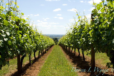 Black Family Vineyards_003