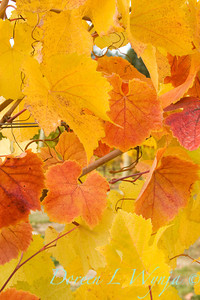 Fall Leaves_011