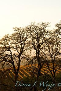 Fall Vines_029