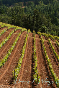 Bella Vida Vineyards_025