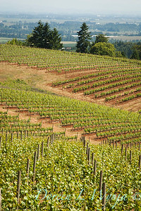 Bella Vida Vineyards_011