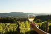 Wine glass in hand - Bryan Creek vineyard_013