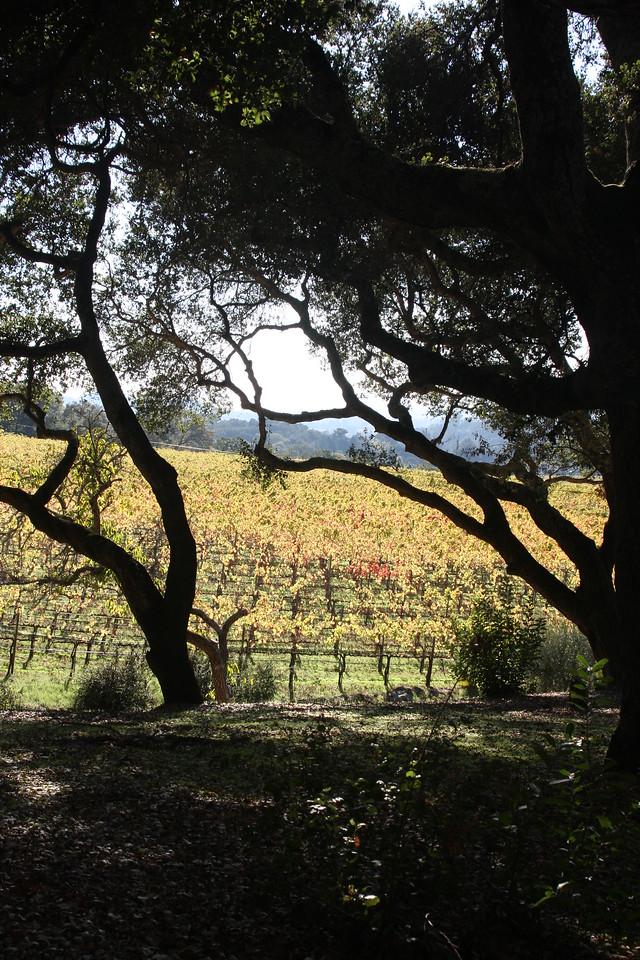 Farella Vineyard where we received our Merlot this year for Vino Pregiati.  Napa, CA