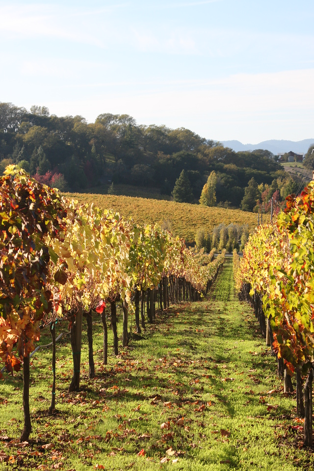 The views in Coombsville (Napa) were just spectacular!  And the colors...