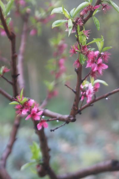 Spring hopes eternal...or something like that.