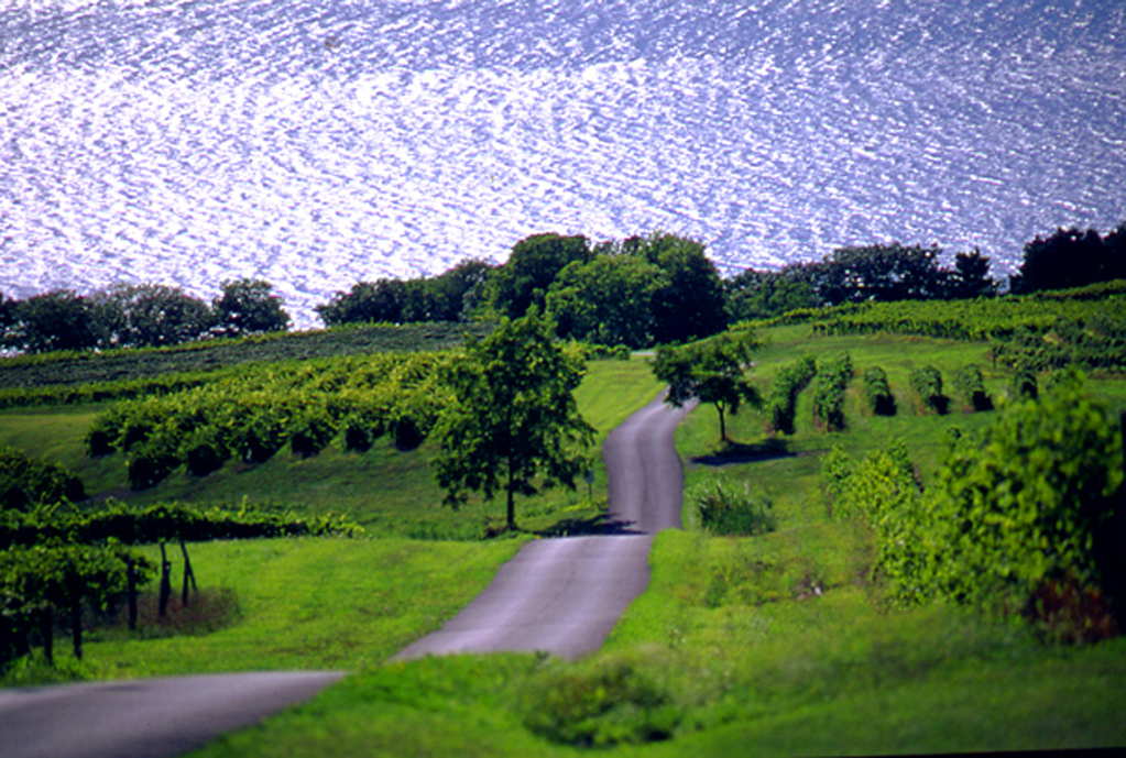 Vineyards, Seneca Lake