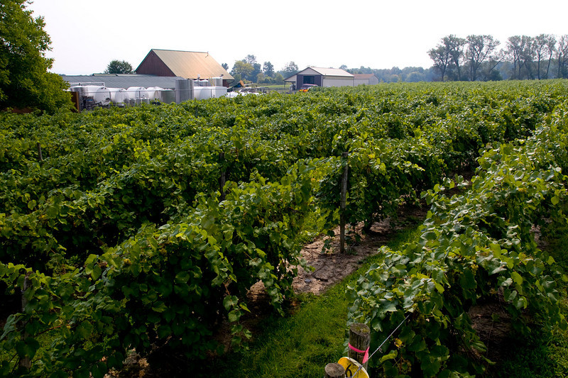 North America, United States, New York State, Seneca County, Interlaken, Lucas Vineyards
