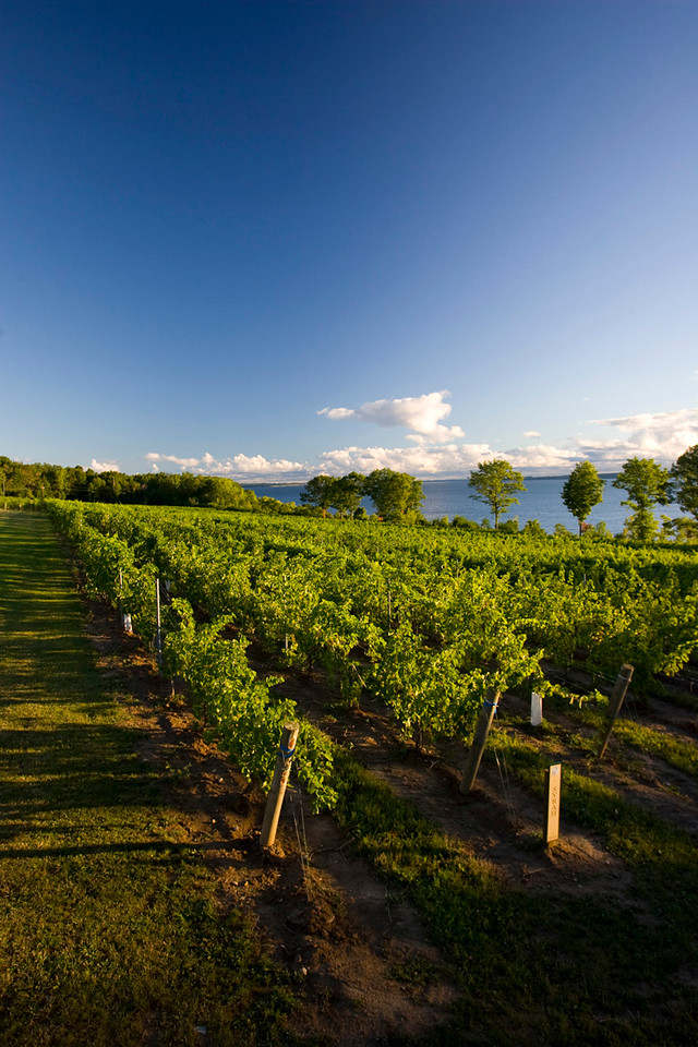 North America, USA, New York State, Cayuga County, Cayuga Wine Trail