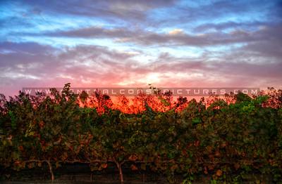 cottonwood-winery_6129
