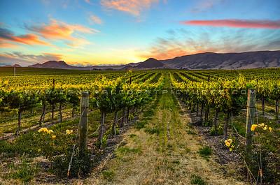 edna valley vineyard-3658b