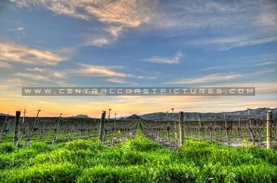 edna-valley-vineyard_8100