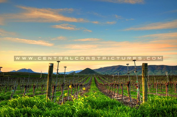 edna-valley-vineyard_8101