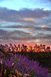cottonwood-winery_6118
