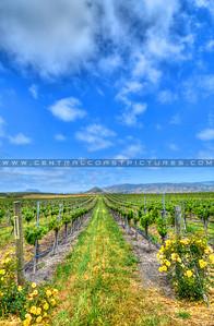 edna-valley-vineyard_7137