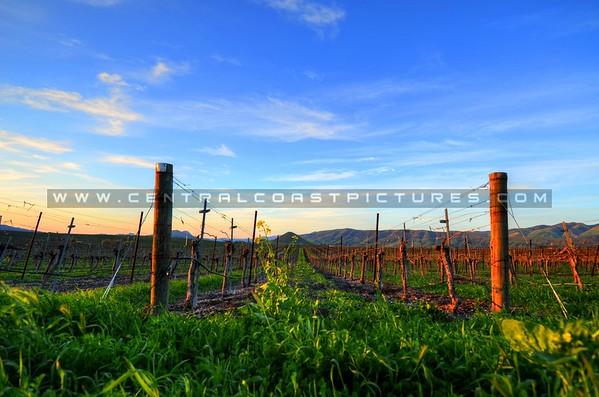 edna-valley-vineyard_8081