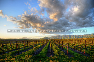 edna-valley-vineyard_6593