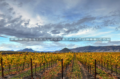 edna-valley-vineyard_9017