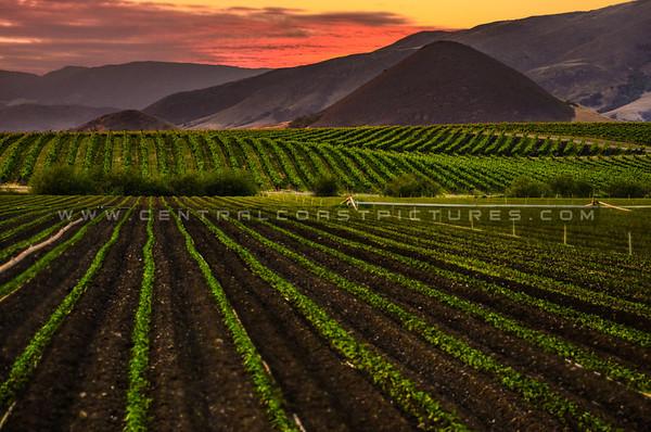 edna valley vineyard-3649b