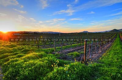 edna-valley-vineyard_8076